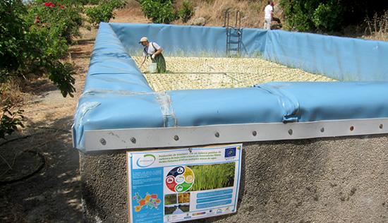 Producción de biocombustibles a partir de plantas acuáticas que limpian el agua