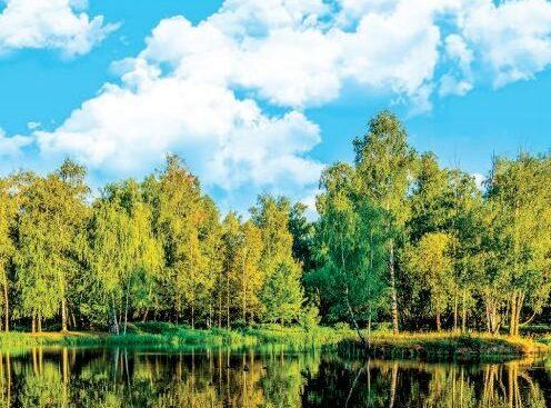 (Español) Biomasa forestal y cambio climático, biocombustibles y biorrefinerías, temas clave en el Informe Anual de IEA Bioenergy